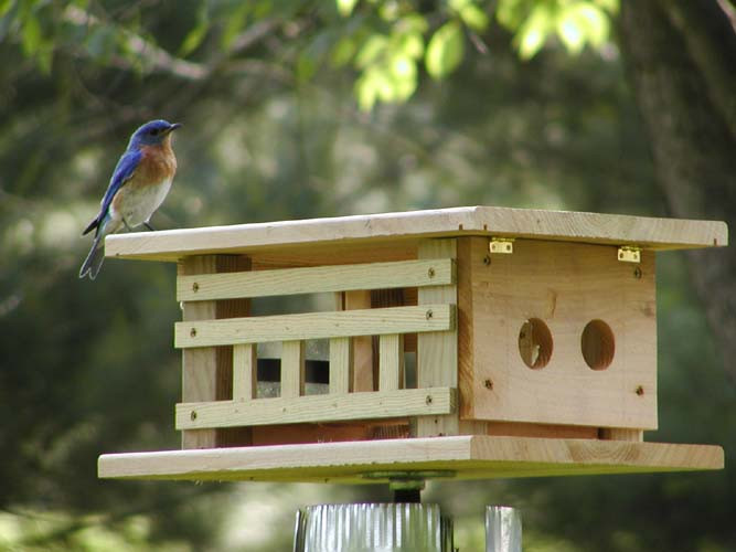feeders meal feeder bluebird worm treats baffled crumble